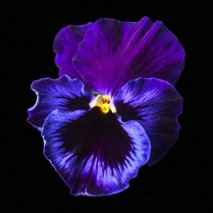 floralbeauty-imagingpeople-leonie-voets-fotograaf-blackbeauty01